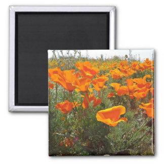 Orange Poppy Field of Flowers Magnet