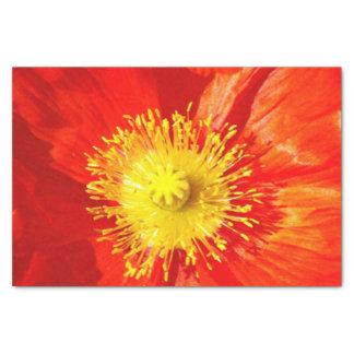 Orange Poppy tissue paper