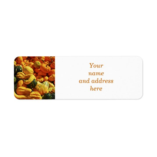 Orange pumpkins and gourds