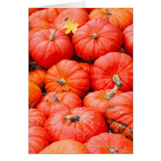 Orange pumpkins at market, Germany Card