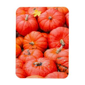 Orange pumpkins at market, Germany Rectangular Photo Magnet