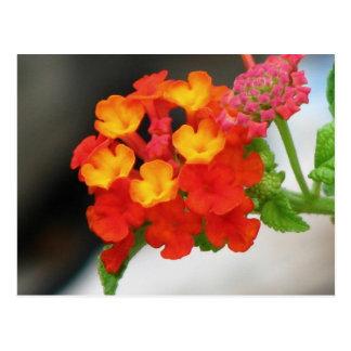 Orange-Red Lantana Postcard