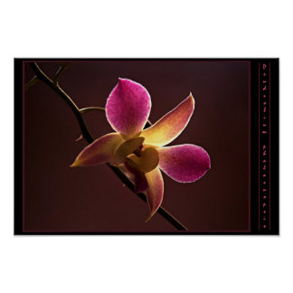 Orange-Red Orchid Poster