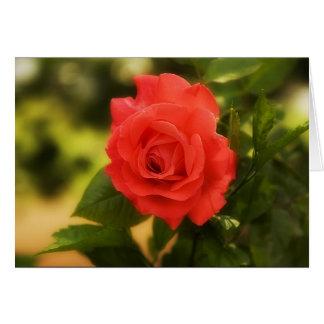 Orange/red Rose Greeting Card