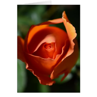 Orange Rose Blossom Greeting Card