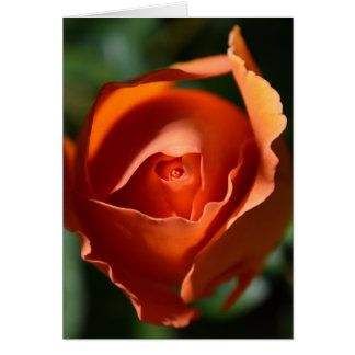 Orange Rose Blossom Note Card