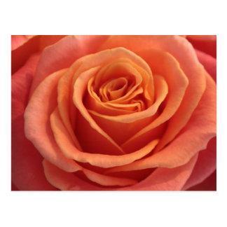 Orange rose blossom postcard