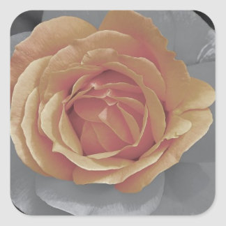 Orange rose blossoms print square sticker