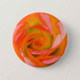 Orange Rose Close-up 2 Inch Round Button
