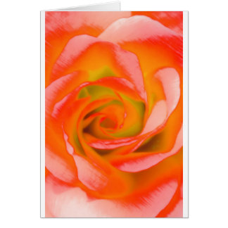 Orange Rose Close-up Card
