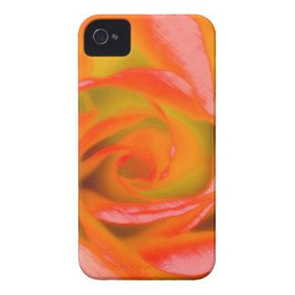 Orange Rose Close-up iPhone 4 Cover