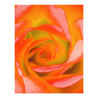 Orange Rose Close-up Letterhead