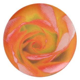 Orange Rose Close-up Plate