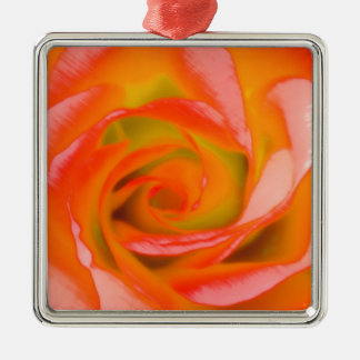 Orange Rose Close-up Silver-Colored Square Ornament