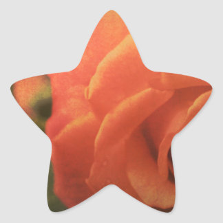 Orange Rose Star Sticker