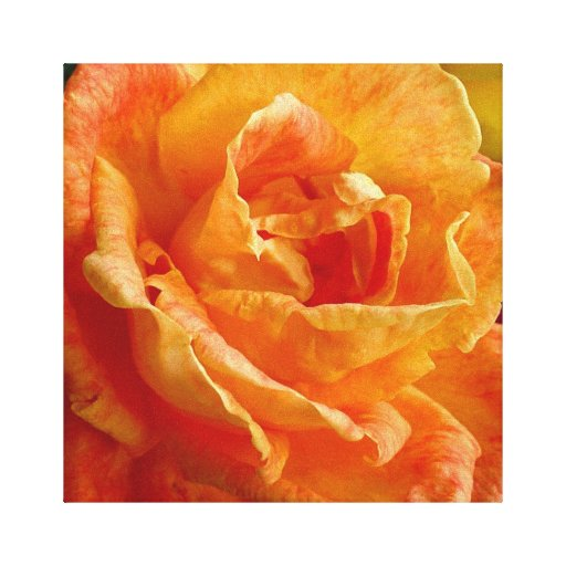 Orange Rose Wrapped Canvas Stretched Canvas Print