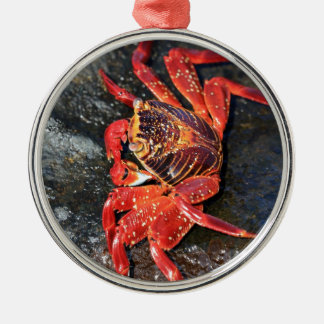 Orange sally lightfoot crab Galapagos Islands Silver-Colored Round Ornament