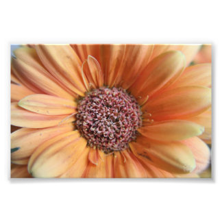 Orange Sherbet Daisy Photo Print