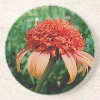 Orange Southern Belle Coneflower Beverage Coasters