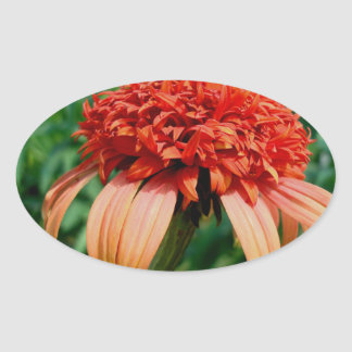 Orange Southern Belle Coneflower Oval Sticker