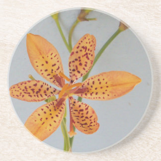 Orange spotted Iris called a  Blackberry lily Coaster