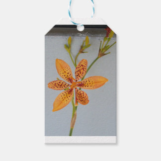 Orange spotted Iris called a  Blackberry lily Gift Tags