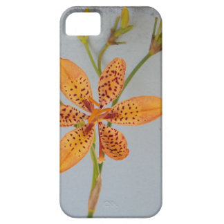 Orange spotted Iris called a  Blackberry lily iPhone 5 Case