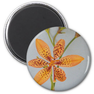 Orange spotted Iris called a  Blackberry lily Magnet