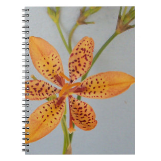 Orange spotted Iris called a  Blackberry lily Notebook