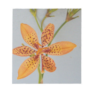 Orange spotted Iris called a  Blackberry lily Notepad