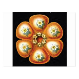 orange star flower pattern postcard