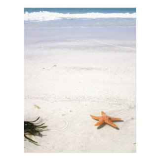 Orange starfish on a white sandy beach letterhead design