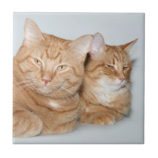 Orange tabbies tile