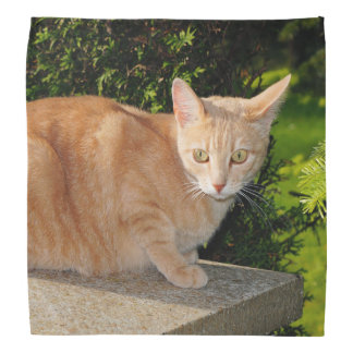 Orange Tabby Cat Bandanna