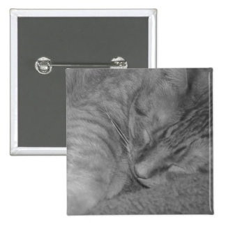 Orange Tabby Cat Black White Photo Buttons