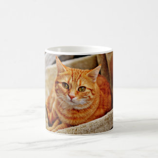 Orange Tabby Cat Coffee Mug