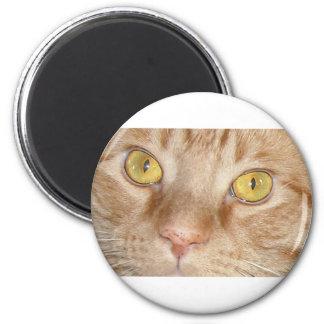 Orange Tabby Cat Eyes 2 Inch Round Magnet