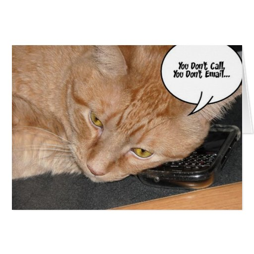Orange Tabby Cat Humor Card