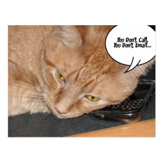 Orange Tabby Cat Humor Postcard