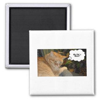 Orange Tabby Cat Humor Square Magnet
