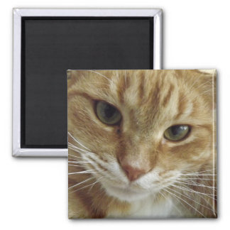Orange Tabby Cat Magnet