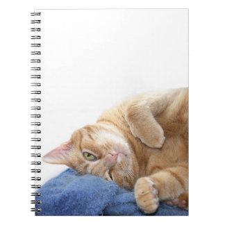 Orange tabby cat note book