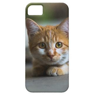 Orange tabby cat portrait. iPhone 5 cases