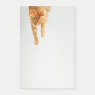 Orange Tabby Cat Post-it® Notes 4 x 6