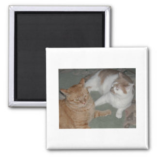 Orange Tabby Cats Magnet