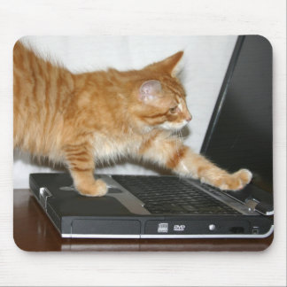 Orange tabby computer mouse pad