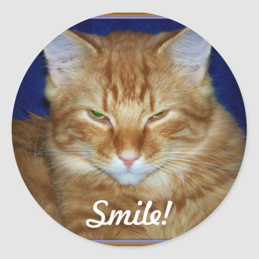 Orange Tabby Feral Cat Smile Sticker Stickers