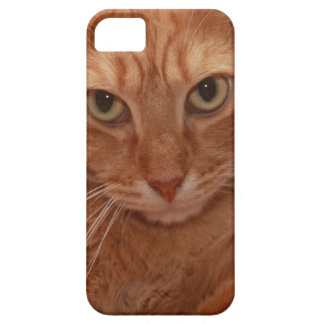 Orange Tabby iPhone 5 Case