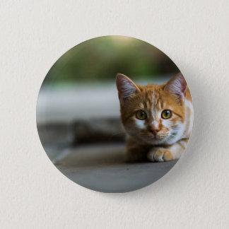 Orange tabby kitten. 2 inch round button