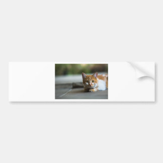 Orange tabby kitten. bumper sticker